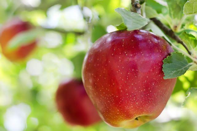 Entre os benefícios da maçã estão o combate ao colesterol ruim e o aumento da imunidade