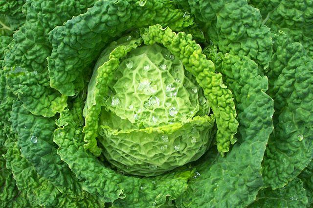 Um dos benefícios da couve é proteger a mucosa do estômago do suco gástrico