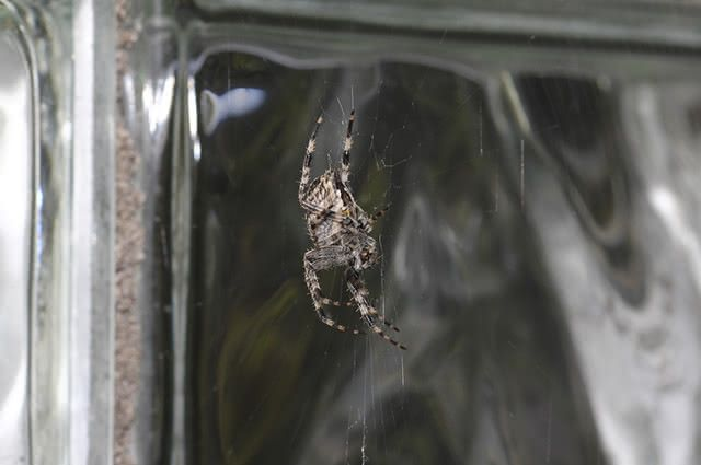 Alguns repelentes naturais são fáceis de encontrar e eficientes contra esses aracnídeos