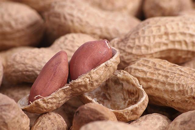 Entre os benefícios do chá de amendoim está o de favorecer a composição dos músculos do corpo