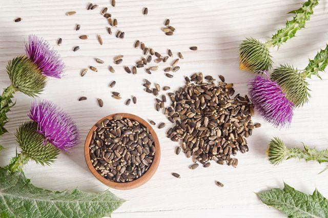 O chá de cardo-mariano consegue tratar gordura no fígado