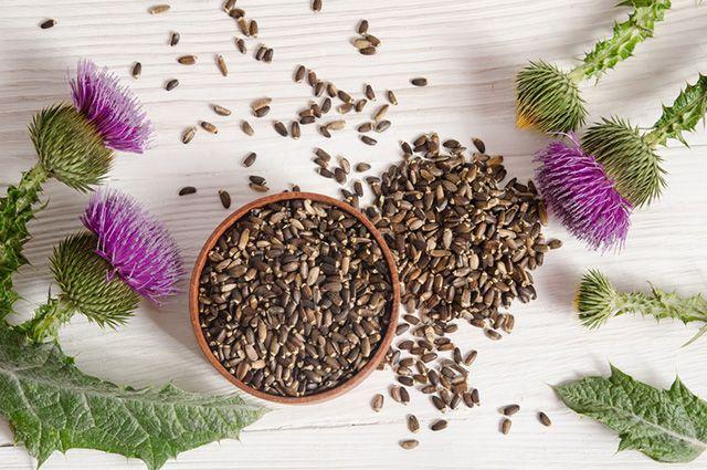 Um dos tratamentos caseiros para gordura no fígado é o chá de cardo mariano