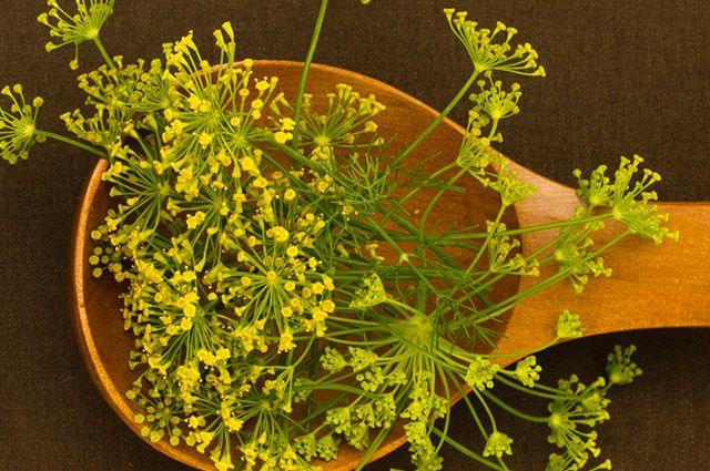 O chá de semente de erva doce consegue tratar gordura no fígado
