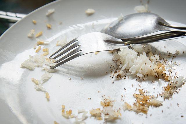 Fora os métodos caseiros para matar formigas, vale apostar em hábitos de precaução