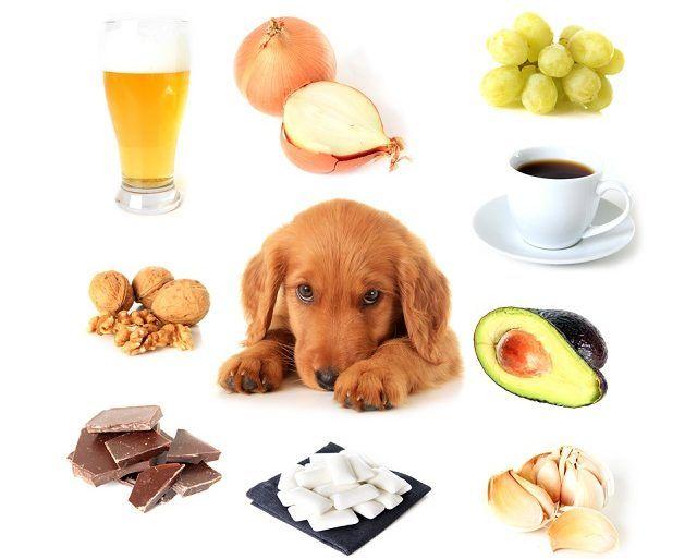 Alimentos proibidos para cachorro