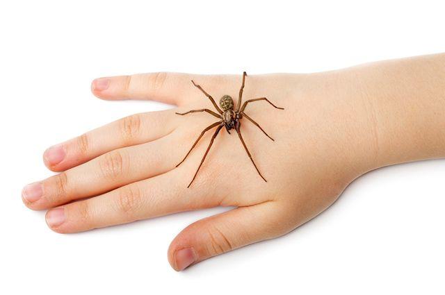 Aranha em cima de mão humana