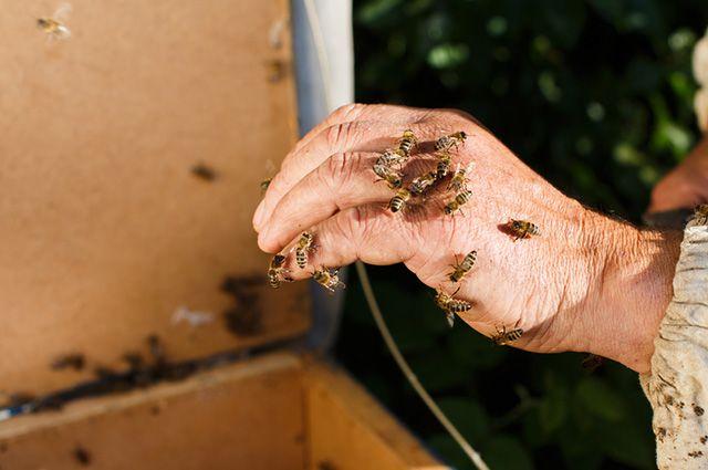 Mão com abelhas
