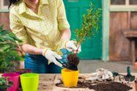 Horta ecológica: dicas para fazer em casa