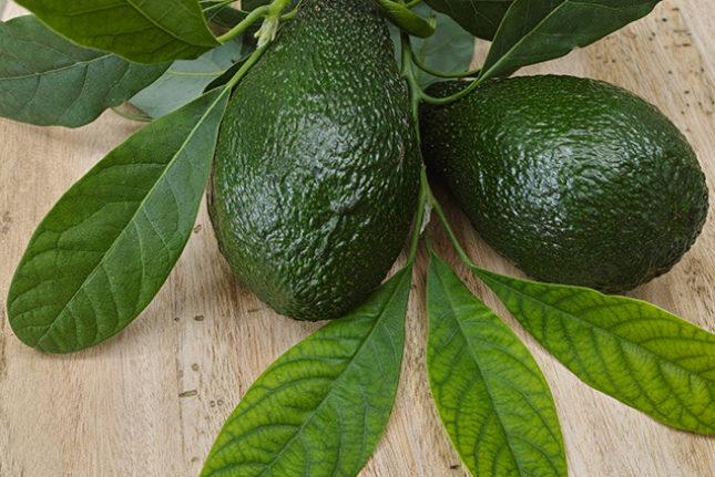Chá de folhas de abacate: 10 benefícios e como fazer